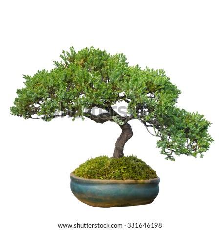 Bonsai tree garden isolated on white stock photo 381646198 for Dove comprare bonsai