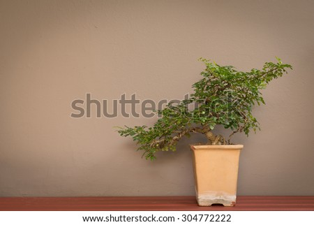 bonsai tree in pot on wall background vintage style color tone. - stock photo