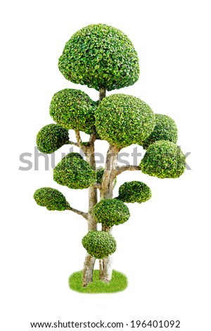 Bonsai tree, isolated on a white background. - stock photo