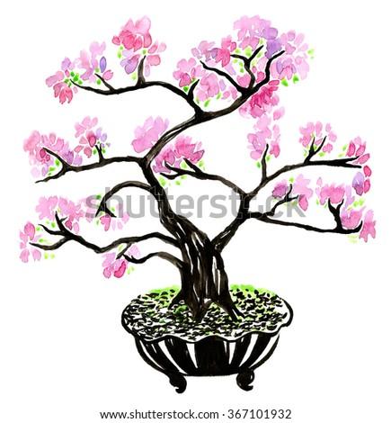 Bonsai tree sakura watercolor - stock photo