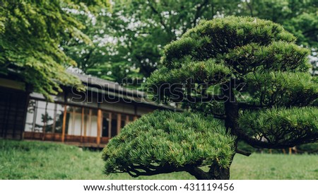 Bonsai tree with authentic Japanese house