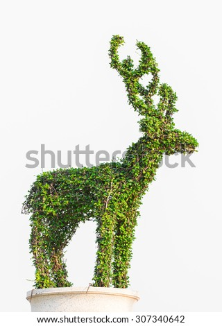 bonsai tree with Trim a deer in pot Isolated on white background - stock photo
