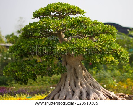 bonsai trees in the garden - stock photo