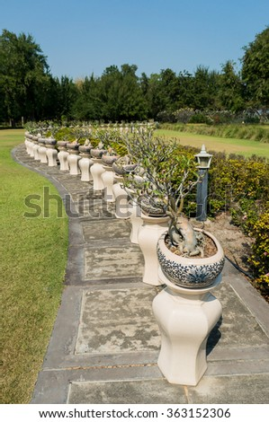 Bonsai trees pots lined in rows on the park / Gorgeous garden