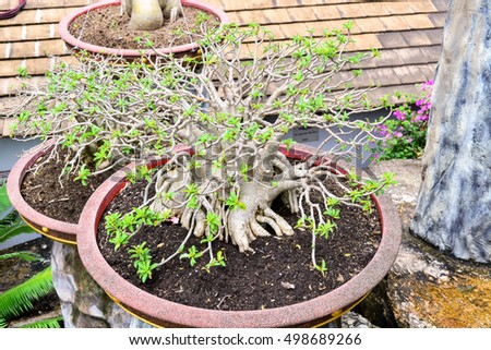 Bonsai with flower and leaf in the garden(blurred)