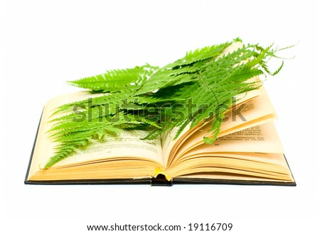 Book and plant isolated on white