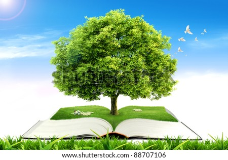 Book with tree on natural background. education concept - stock photo