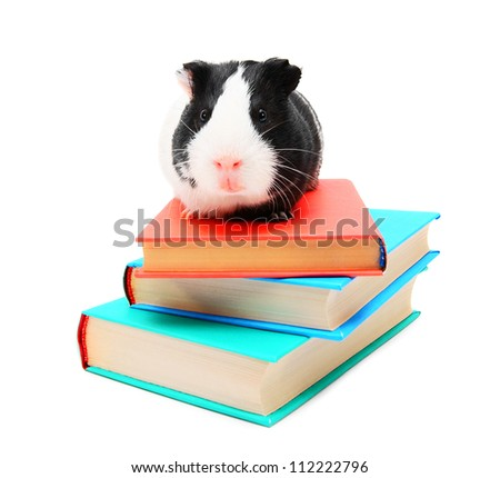Books and the guinea pig. - stock photo