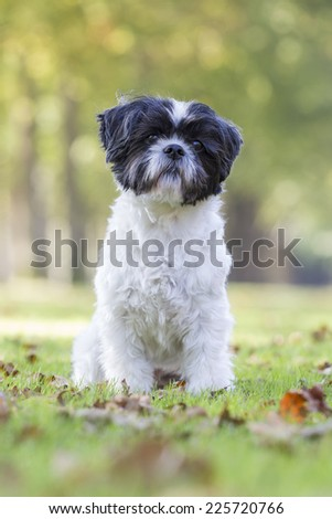 Boomer dog sitting in the grass - stock photo