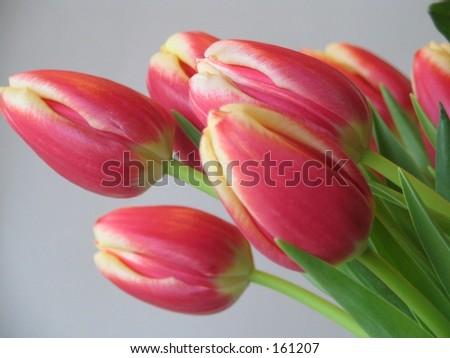 boquet of tulips - stock photo