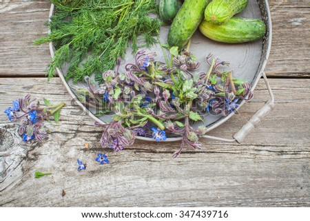 Borage (Starflower), dill and cucumbers  on a wooden board. Above view. Also available in vertical format. - stock photo