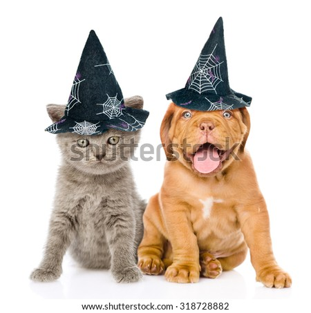 Bordeaux puppy and kitten  with hats for halloween sitting together. isolated on white background - stock photo