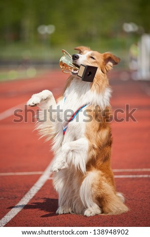 border collie dog with medal and award make show trick - stock photo