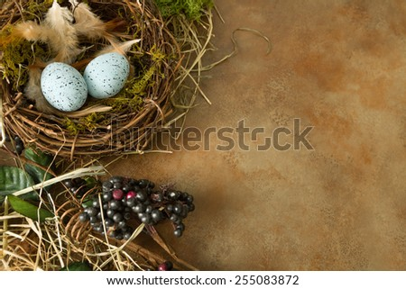 Border frame image made of berries, spring leaves and a bird's nest - stock photo
