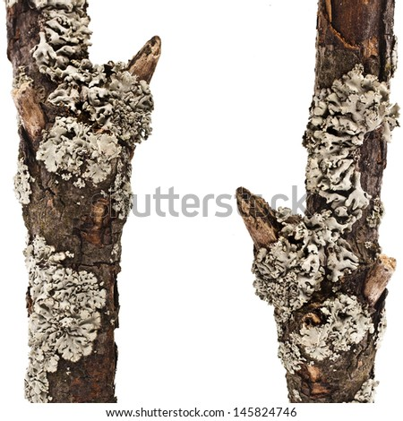 border frame of dry wood branches close up isolated on a white background  - stock photo