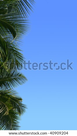 Border from leaves of palm trees - stock photo