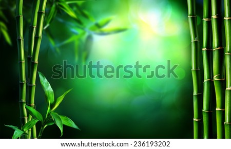 border green bamboo in dark forest  - stock photo