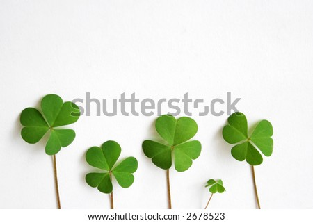 border mada from four three leave clovers over white background - stock photo