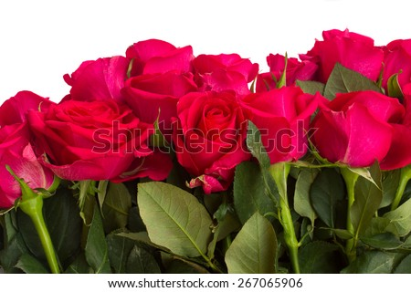 border of dark pink rose flowers with green leaves  close up isolated on white background - stock photo
