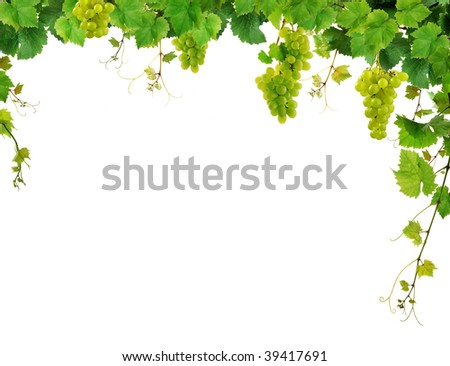 Border of fresh grapevine with ripe grapes - stock photo