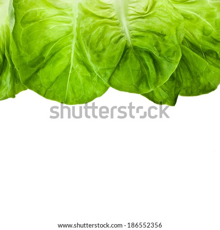 Border of Fresh Lettuce Salad Isolated On White Background - stock photo
