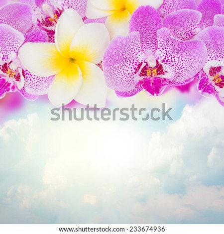 border of fresh  orchid  and frangipani flowers   on blue sky background - stock photo
