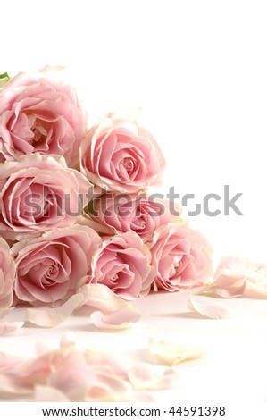 Border of multiple pink roses - stock photo