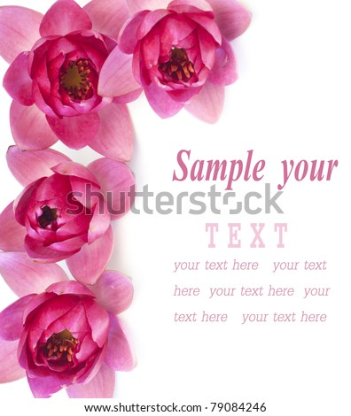 Border of pink water lilies over white background - stock photo
