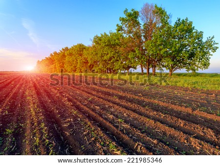 Border of ploughed agricultural field on sunset background - stock photo