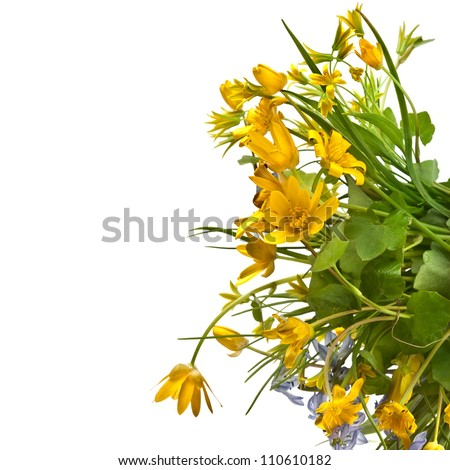 Border of wild flowers on a white background - stock photo