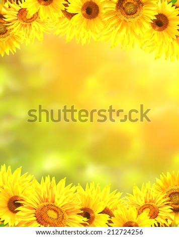 Border with bright yellow sunflowers - stock photo