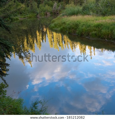 Boreal forest taiga reflection on calm water surface of wetland pond, Yukon Territory, Canada - stock photo