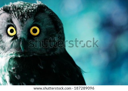 Boreal Owl in the darkness - stock photo
