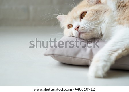 Bored cat lying on bed - stock photo