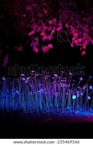 Botanic garden in Edinburgh during night. Light show. Light performance. Park, outdoor, trees, summer in a city. Night life in a city. Shadows by moonlight, luminosity. light decoration.  Modern art. - stock photo
