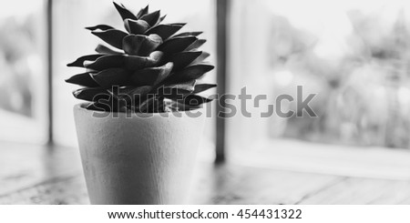 Botanic Growing Plant Relaxation Leisure Fresh Concept - stock photo