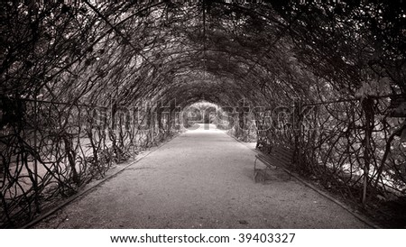Botanic walkway with arch of foliage above.