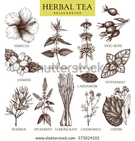 Botanical collection of hand drawn herbal tea ingredients. Decorative vintage set of vintage herbs and spice sketch isolated on white - stock photo
