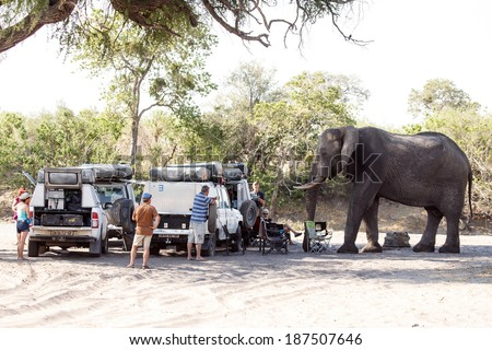 BOTSWANA - OCTOBER 6 2013: Hungry Elephant and tourists in a year of drought at Savuti Camp Site in Chobe National Park, Botswana - stock photo
