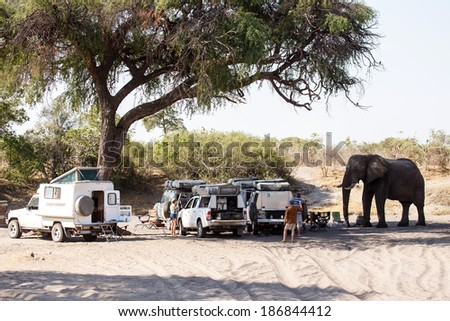 BOTSWANA - OCTOBER 6 2013: Hungry Elephant attacks tourists in a year of drought at Savuti Camp Site in Chobe National Park, Botswana - stock photo
