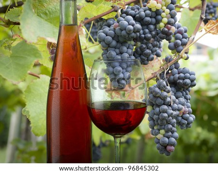 Bottle and glass of rose wine with dew drops - stock photo