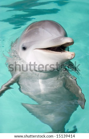 bottle-nose dolphin smiling to the camera - stock photo