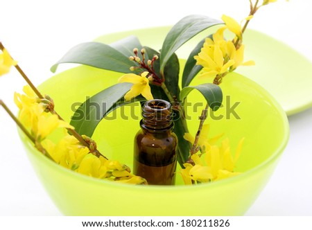 Bottle of essential oil and forsythia flowers  - stock photo