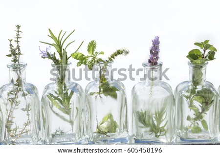 Bottle of essential oil with herbs lavender flower, basil flower,rosemary,oregano, sage, ,thyme and peppermint set up on white background