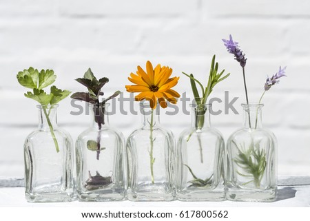 Bottle of essential oil with herbs lavender flower, mint ,rosemary, marigold, and parsley set up on white background .