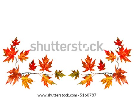 Bottom border with red fall maple leaves