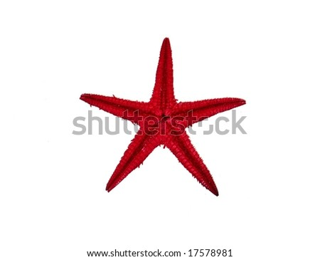 Bottom of a Red Starfish Over White with Copy Space
