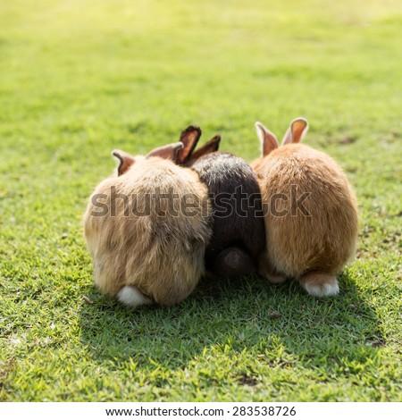 bottom of triple cute rabbits in garden - stock photo