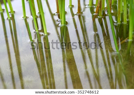 Bottom part of aquatic flora  plant. - stock photo