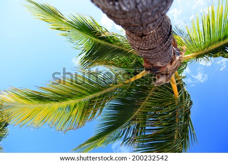 bottom view of the lush tropical palm tree against a blue sky - stock photo